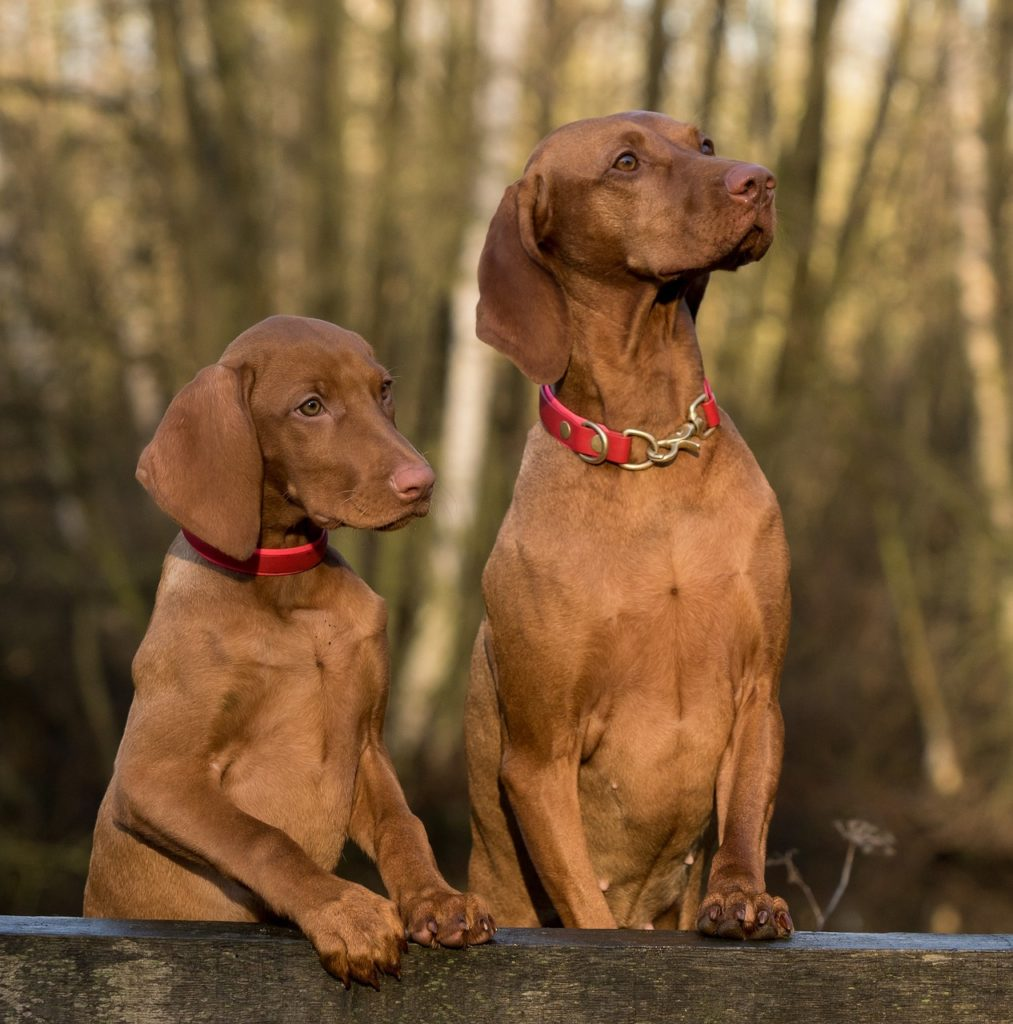 Choosing the Best Dog for Your Family