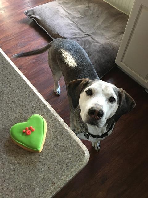 Why Feed Your Dog Vegan Dog Food?