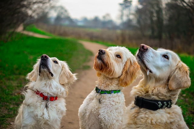 Best Healthy Dog Treats for Training