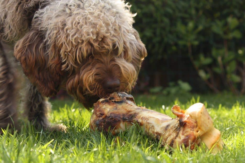 Quick & Easy Home Made Dog Food Recipe