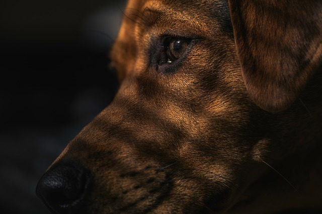 Stinky Dog Breath: What Causes It and How To Prevent It