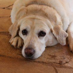 Overfeeding your dog?