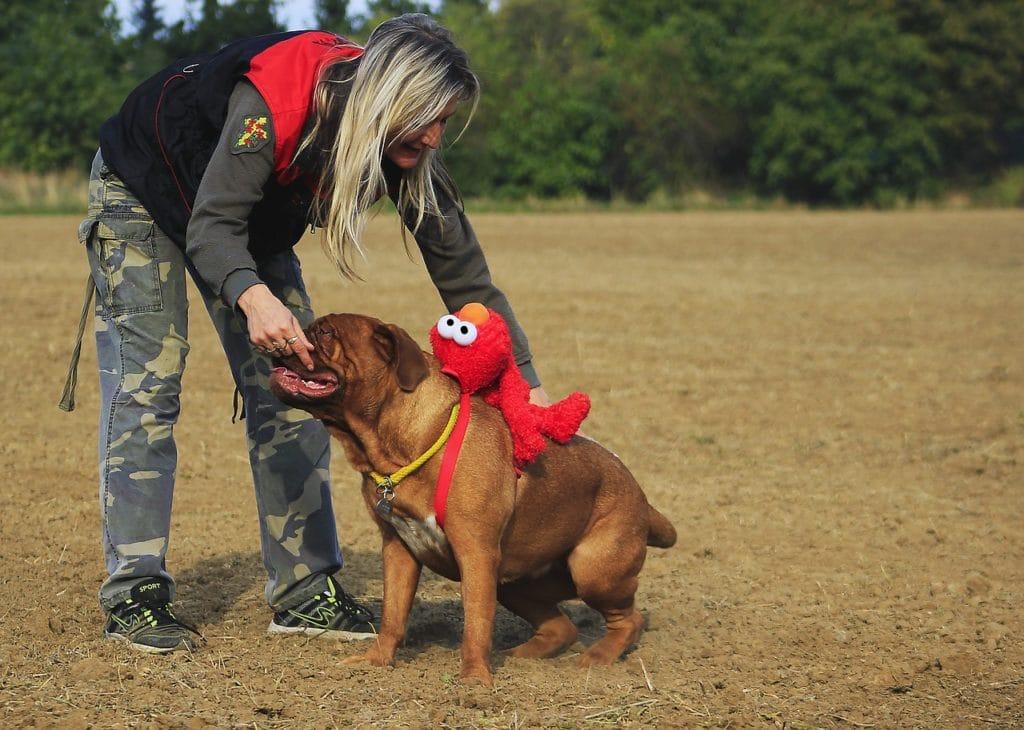 Potty training an older dog