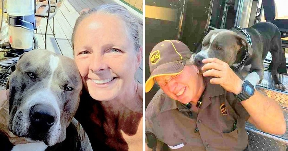 Dog Who Lost His Human Mom Gets Adopted By UPS Driver