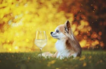 Now You Can Share A Glass Of Wine Wine With Your Dog